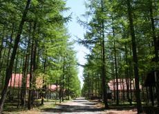 休暇村の中の道路と並木の様子